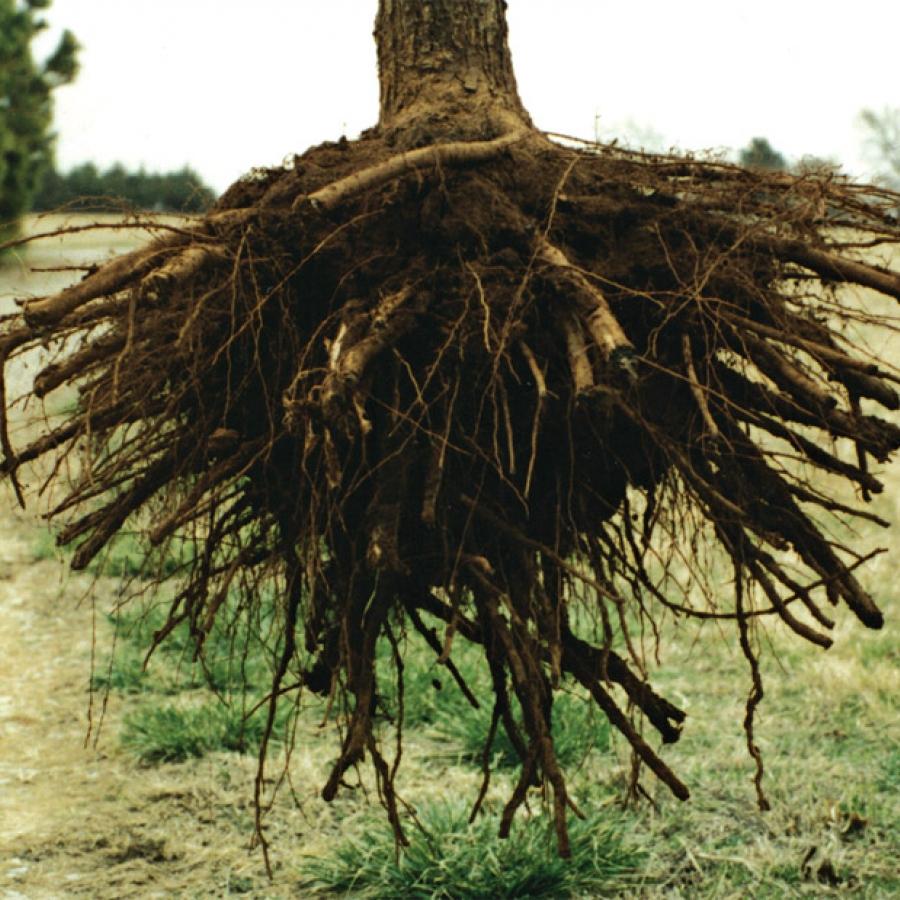The Rootmaker System Rootmaker