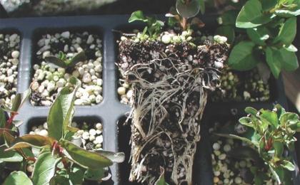 Additional Branching